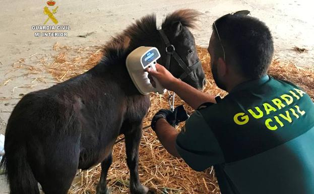 La Guardia Civil comprueba el microchip del animal.